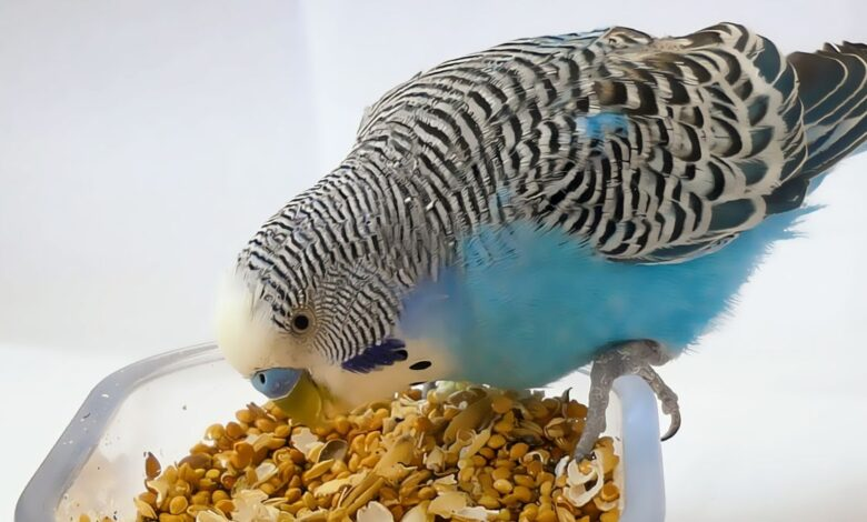 Best Budgie Cage Cleaning Accessories from Amazon