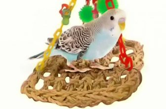 Best foraging toys for Budgies from Amazon to keep them happy